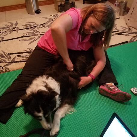 Canine Massage